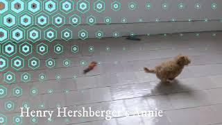 Henry Hershberger's puppy Annie