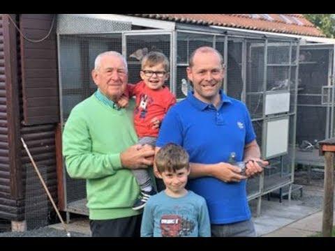 Video Dreampigeons op bezoek bij Bert en Raoul Penne Nederhasselt (B)