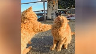 If you WATCH THIS 1000 TIMES, you will STILL LAUGH! - The FUNNIEST CATS