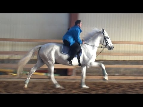 , title : 'Год лошади-орловский рысак - The Year of Horse-The Orlov Trotter
