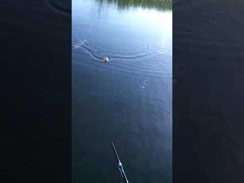 Pescaria em Anaurilandia MS tucunare