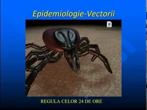 Controlul conștiinței furnicilor