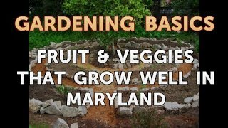 Fruit & Veggies That Grow Well in Maryland