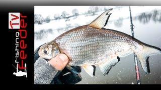 ✅Vlog #17 Рыбалка на фидер. Ловля белоглазки, подлещика. Рыбалка на реке с Сергеем Пузановым. 2018
