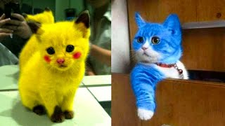 Baby Cats - Cute And Funny Cat Videos Compilation #14 | Aww Animals