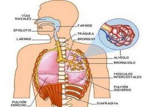 Questionario per il mal di schiena