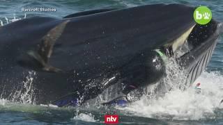 Drama im Meer vor Südafrika: Riesiger Wal packt deutschen Taucher