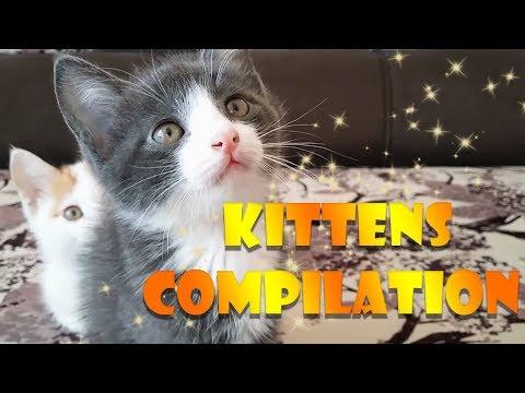 Funny Kittens Compilation | Kuzya And Johny