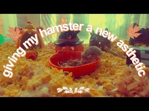 Butterball's FALL Theme Hamster Cage! - смотреть онлайн на