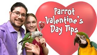Valentine's Day Tips for Parrot Lovers