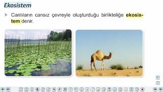 Eğitim Vadisi 10.Sınıf Biyoloji 13.Föy Ekolojik Kavramlar Konu Anlatım Videoları
