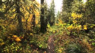 This is a trail video for a trip from West Glacier along the South Boundary Trail to Lincoln Creek, up the creek to Lincoln Lake and back out the Lincoln Lake Trail to Going-to-the-Sun Road