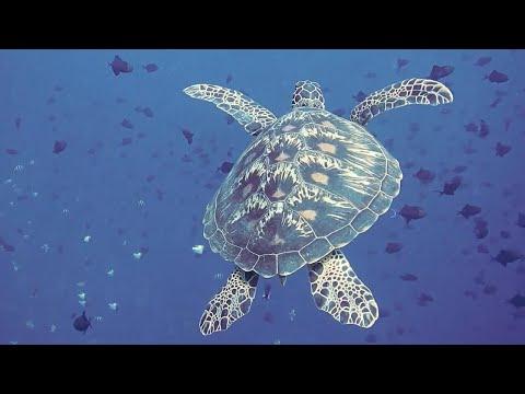 Sons do Fundo Mar com Tartarugas e Msica para Acalmar CRIANAS