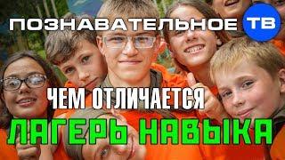 Чем отличается Лагерь Навыка (Познавательное ТВ, Артём Войтенков)