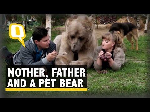300磅巨熊打波淋花樣樣掂