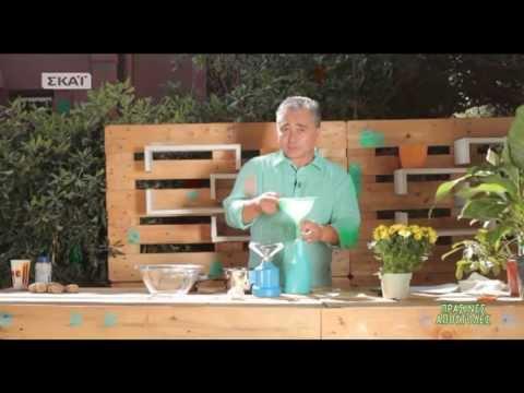 Αντιμετωπίστε το ωίδιο με σκόρδο - Πράσινες αποστολές - ΣΚΑΪ
