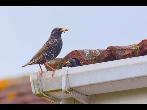 Tips to Keep Birds from Roosting on Your Home