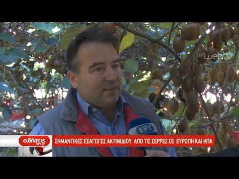 Σημαντικές εξαγωγές ακτινιδίου από τις Σέρρες σε Ευρώπη και ΗΠΑ | 31/10/2019 | ΕΡΤ