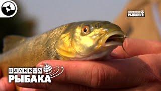На что клюет рыба конфета в рыбном месте