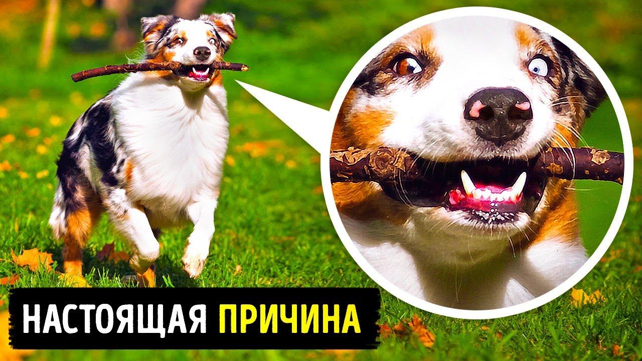 20+ собачьих повадок, которые наконец удалось объяснить