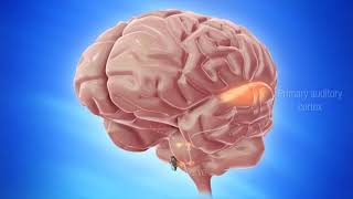 Il Metodo TOMATIS® stimola il cervello grazie alla musica e alla voce