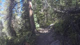 Sun Dog's Blog: Tips for rocky rooty singletrack at the peak of fall color