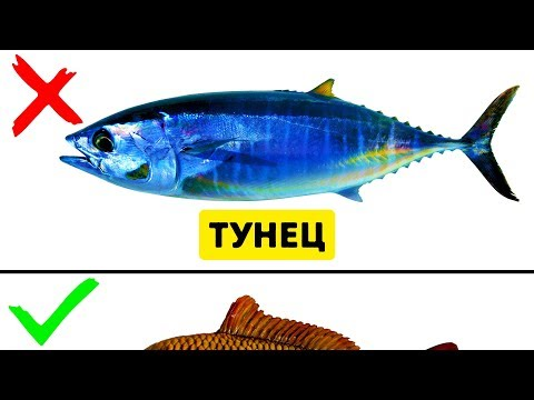 9 Видов Рыбы, Которые Не Стоит Есть