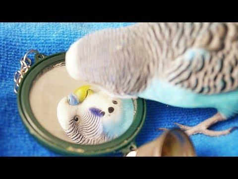 นกแก้วมีหนอน