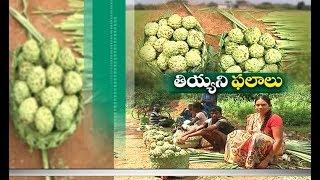 Jaikisan AP   13th Oct 18'   Custard Apple Giving Additional Income To West Godavari Farmers