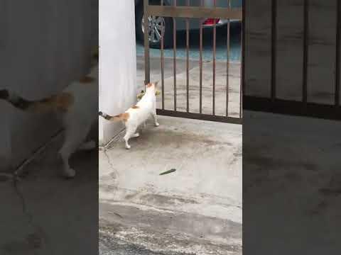 Очень настойчивый котик