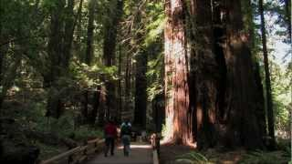 Muir Woods National Monument, San Francisco