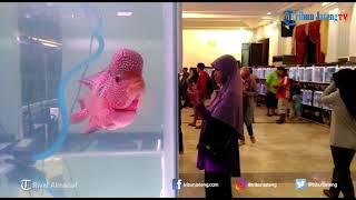 Kontes Ikan Louhan di Wisma Perdamaian Kota Semarang