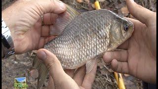 Рыбалка в челябинской области еткуль