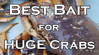 Best Bait for HUGE Crabs!! Opening Day 2019