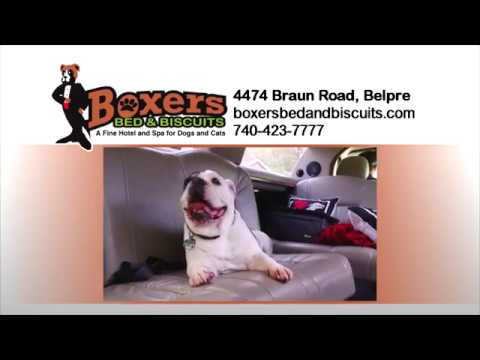 Blog | Boxers Bed and Biscuits