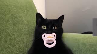 Интересные видео с кошечками и котиками. Лучшие приколы про животных.