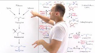 Metabolism Of Methionine
