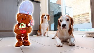 Gingerbread Man vs Dogs Prank : Funny Dogs Louie & Marie