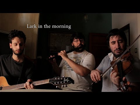Una canción por semana | Lark in the morning | Bri