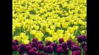 Mohabbat Ko Duniya Salaam Karti Hai [Full Song] (HD