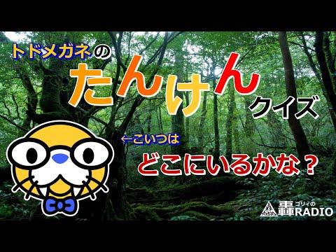 ご希望に合わせた「動画クイズ」を5問制作します オリジナルキャラクター「トドメガネ」のクイズ!5問おまけ付! イメージ1