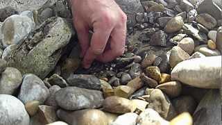 Finding a Petoskey Stone