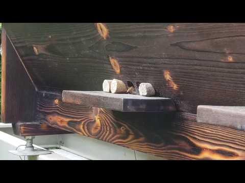 Vantaggio di mummia di emorroidi