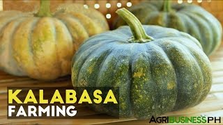 Squash Planting Tips: How to Plant Squash in the Philippines