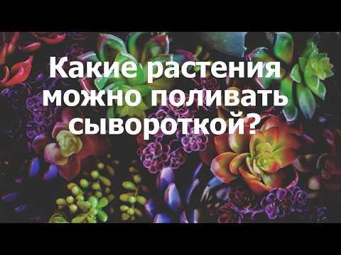 Какие растения можно поливать сывороткой?