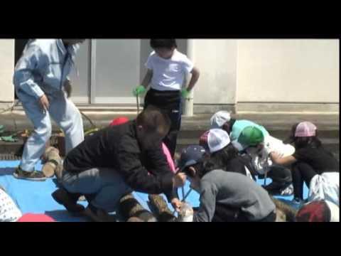 マキノ南小学校「しいたけ菌打ち体験」