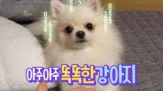 ENG SUB _ A Very Smart Puppy