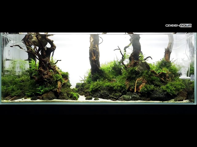 240L Forest Aquascape - Featuring Twinstar Nano