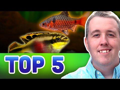 TOP 5 SEMI AGGRESSIVE AQUARIUM FISH