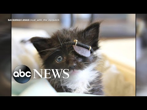 Rescue Kitten Gets Mini-patch After Losing His Eye: 'He's A Fighter'